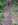 schömberger klimatrasse, römerweg schömberg, kapfenhardt, römerstraße schömberg, wagenspuren schömberg,  cart ruts schömberg, steingleise schömberg, spurrillen schömberg, steinerne geleise schömberg, karrenspuren schömberg, antike gleise schömberg,