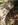 donon, le donon, petit donon, römischer tempel, gallo-romaine, gallo-romanisch, wagenspuren, cart ruts, karrenspuren, steingleise, steinerne geleise